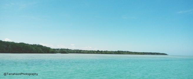 Forest-fringed edges of Bur-Gabo Island, Southern Somalia.